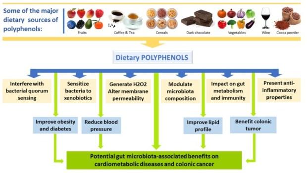 How polyphenols improve gut health
