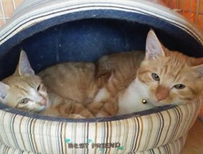 幸せになった12匹の猫たち