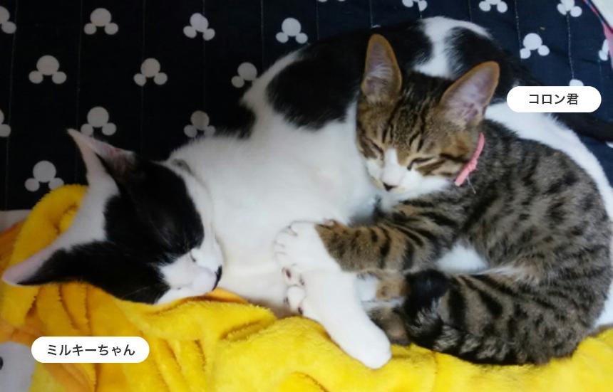 ご家族の温かな愛情に包まれ2匹一緒に暮らしています。