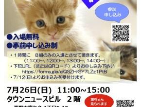7月26日(日) 猫の譲渡会開催!