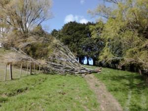 パドックの倒木