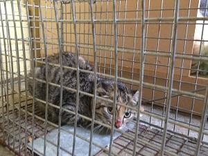 trapped-kitten