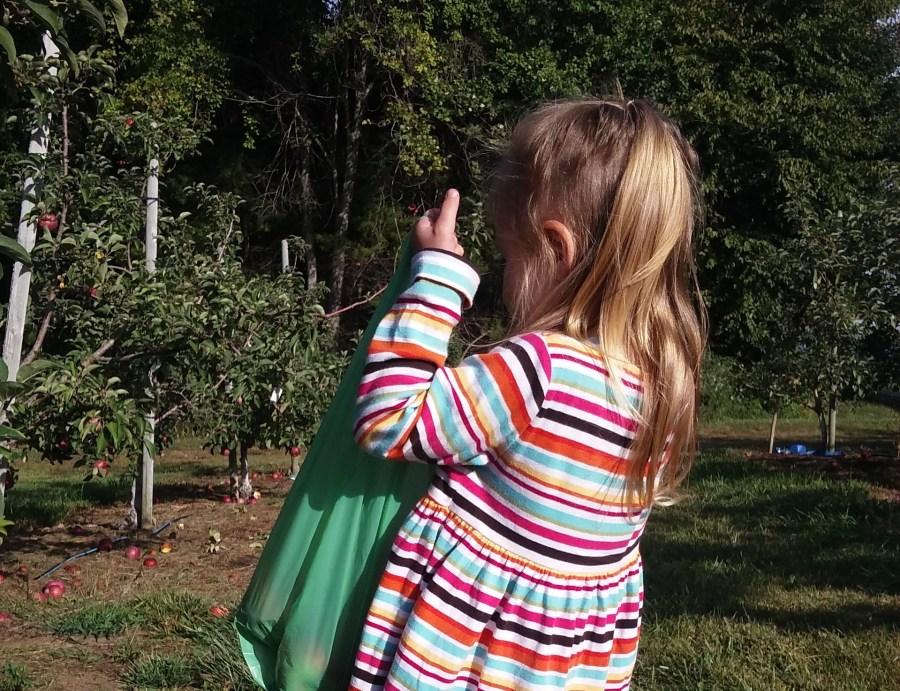 Scott's Apple Orchard