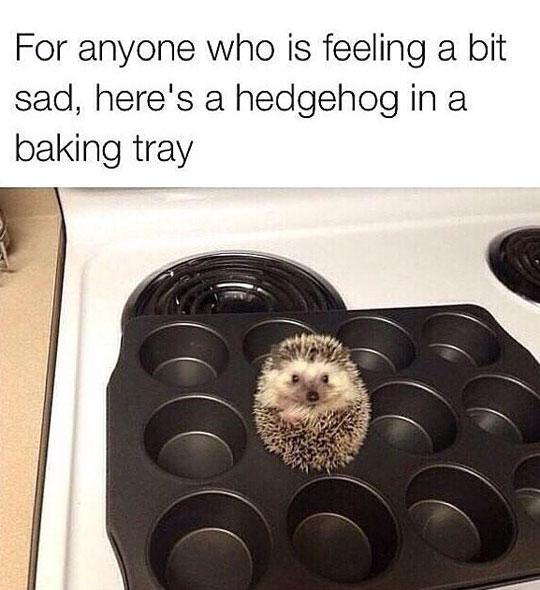 funny-hedgehog-baking-tray