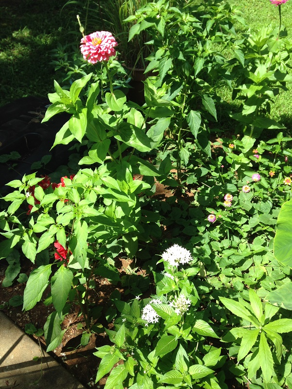 summer-garden