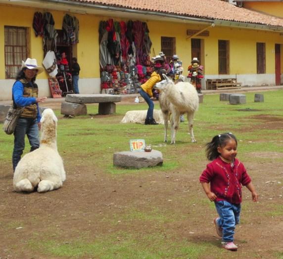 Llittle girll and llamas