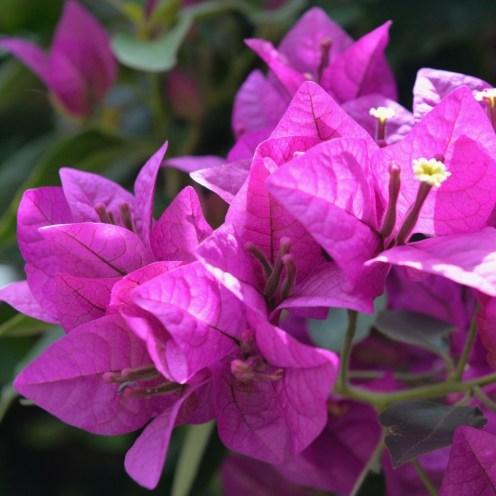 Beautiful flowers near the workshop