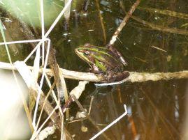 Ein Frosch war auch dabei