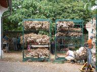 Knoblauchverarbeitung auf dem Hof - Handarbeit, die im Supermarkt landet