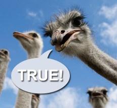 mini-quiz-ostrich-b-462x428