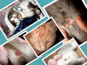 Если у кошки геморрой что делать. Геморрой у кота: причины, симптомы, лечение, восстановительный период и советы ветеринара. Как лечить геморрой у котов