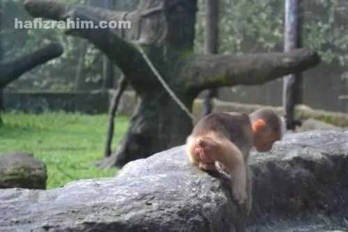 zoo taiping2
