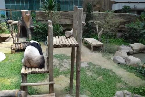 Fu Wa Panda Zoo Negara
