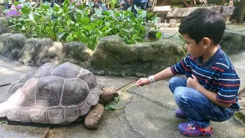 farm-in-the-city-giant-tortoise