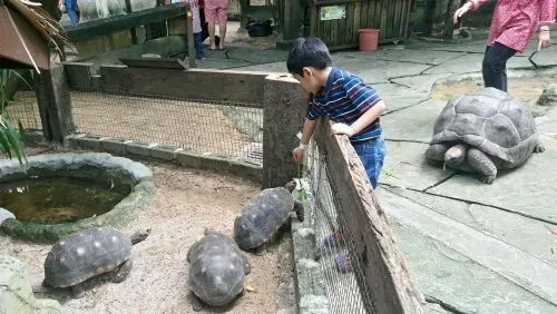farm-in-the-city_petting-zoo-seri-kembangan