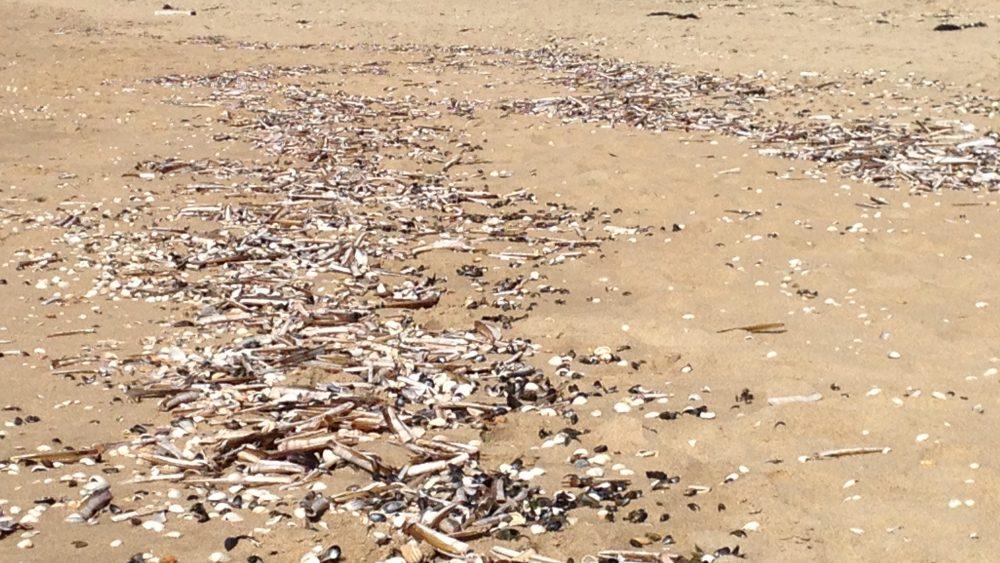 Beachcleaner verstoort natuurbeleving