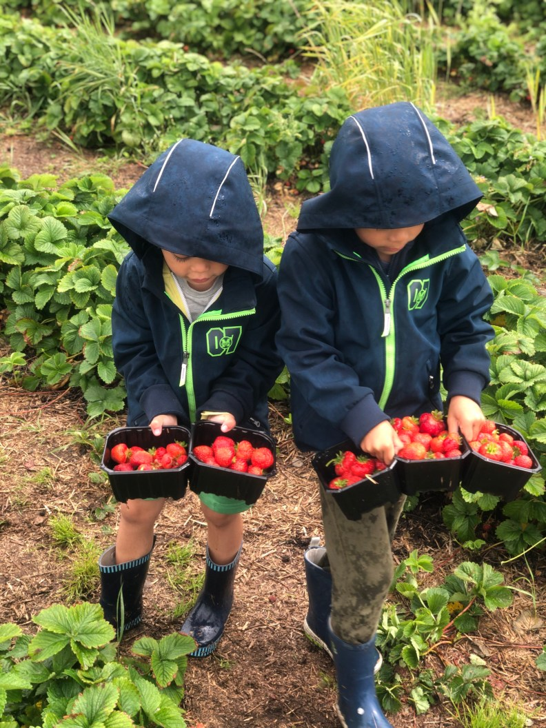 To barn med fem kurver jordbær etter selvplukk.