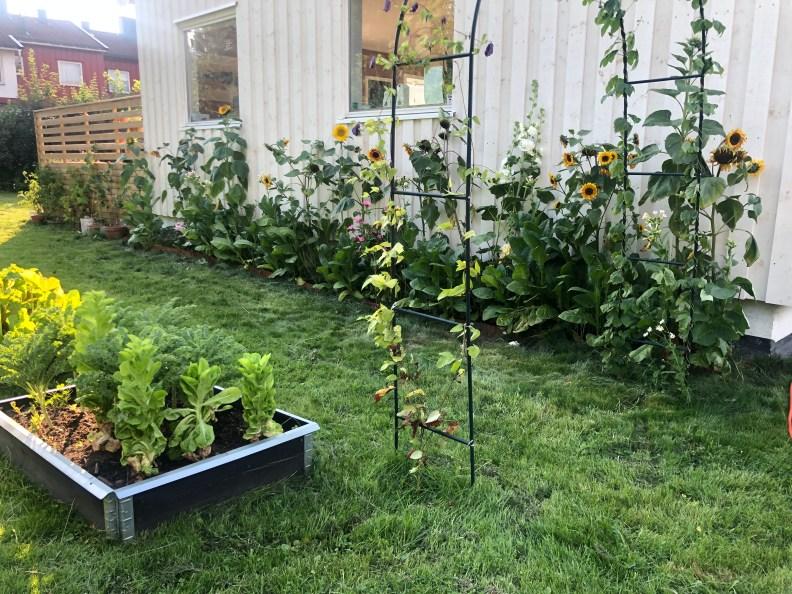 Portal med klatreplanter, bed og pallekarmer