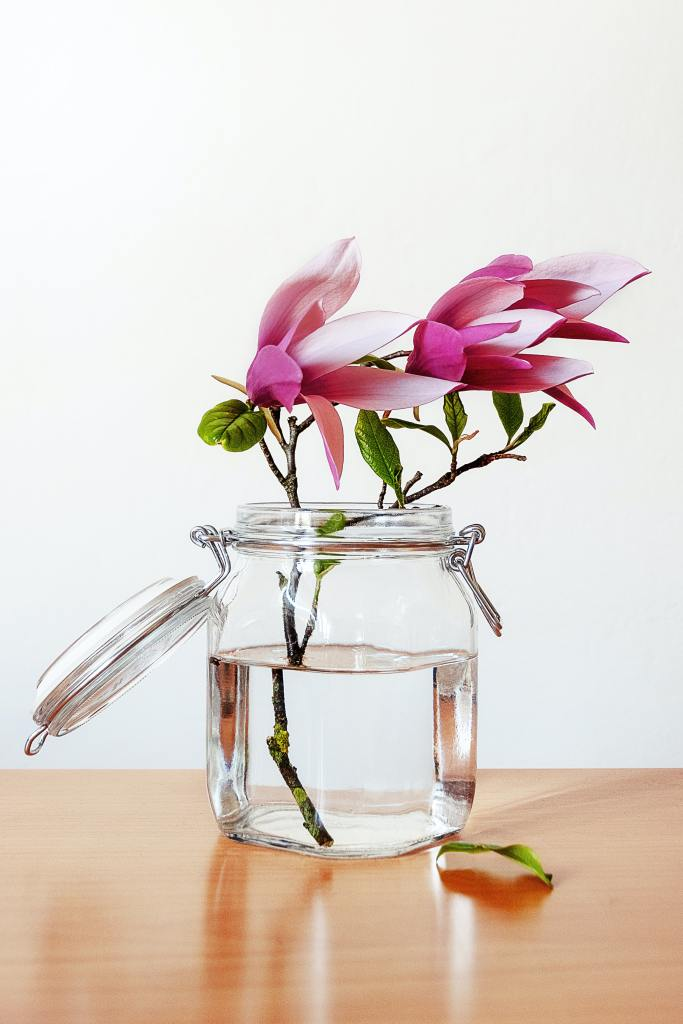 Magnolia blomsterer i glass inne.