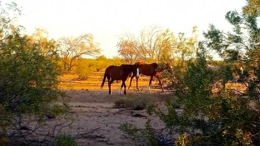 Wild horses along the bike trail
