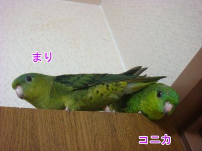 DSC09365のコピー.jpg