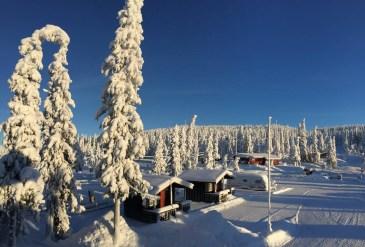 Haglebu i vinterdrakt. Foto.