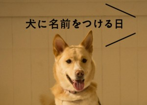 犬に名前をつける日