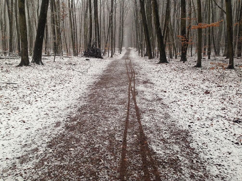 Ein grader, leicht verschneiter Weg durch den winterlichen Wald.