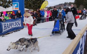 Siberian Huskies: jetzt geht's ab...