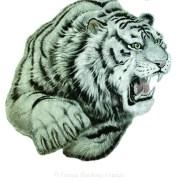 tigre Haidong Gumdo copie