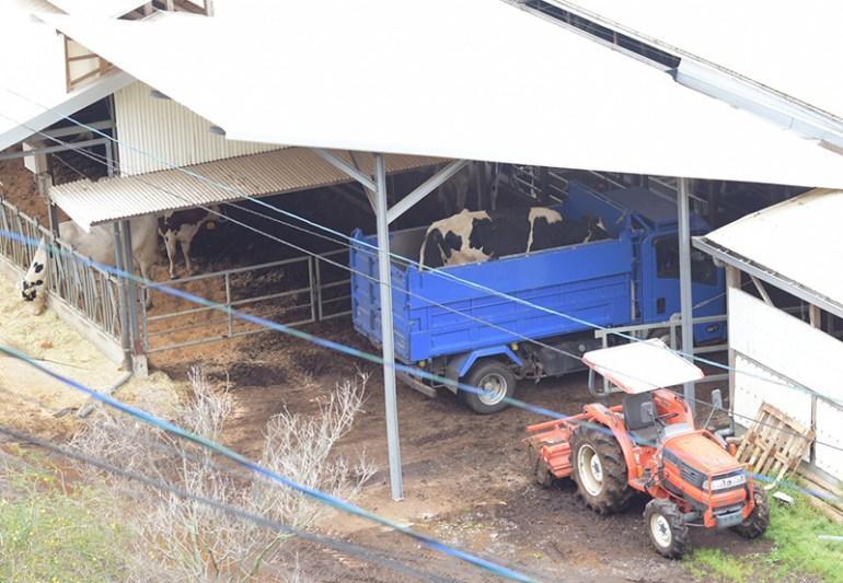 風の牧場 牛が売られていく