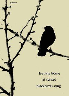 blackbird by polona oblak