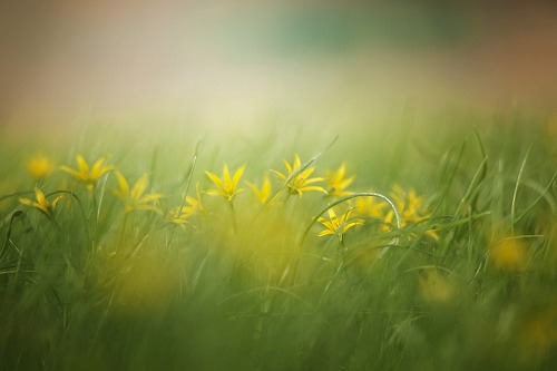 季語 春の