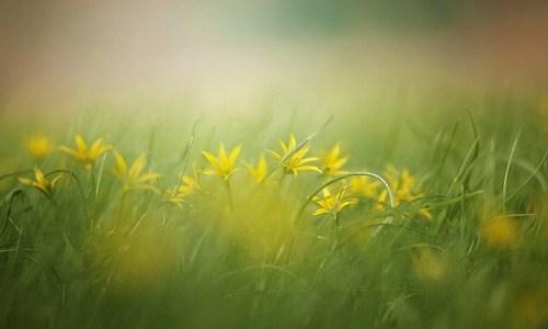 春の季語『霞(かすみ)』