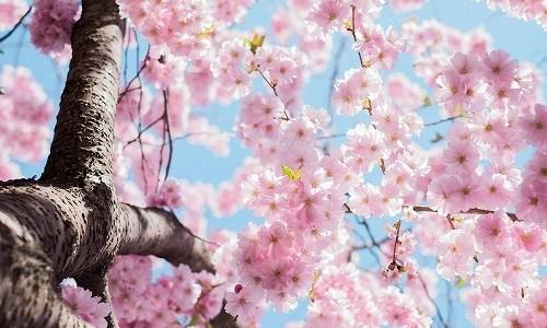 春の季語『花見(はなみ)』
