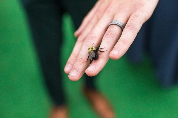 A close-up of a groom's hand with a bee resting on his newly-banded ring finger.
