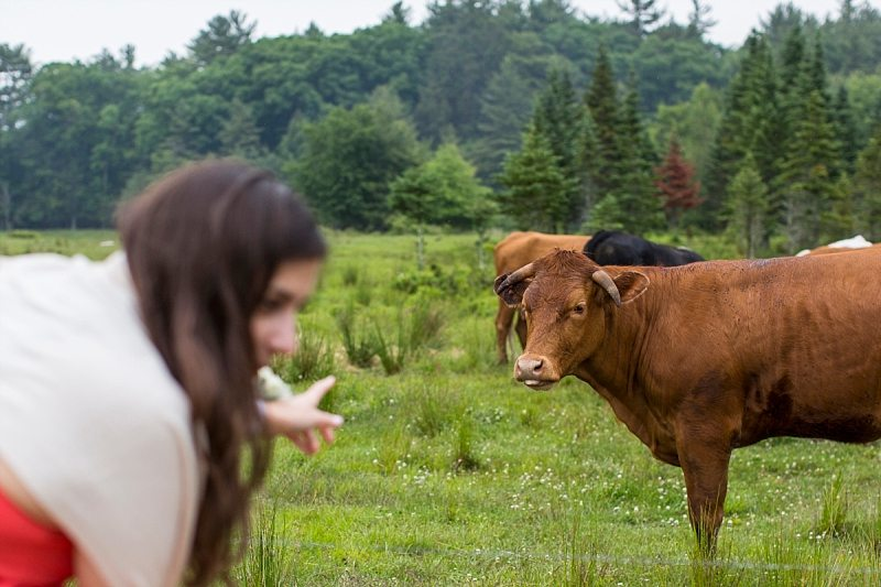 A wedding guest points to a cow as the cow stares back at her.