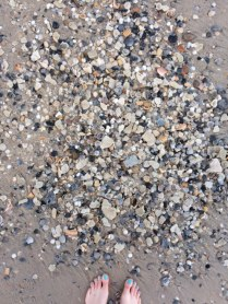 I was shocked at the volume of seashells on the beach