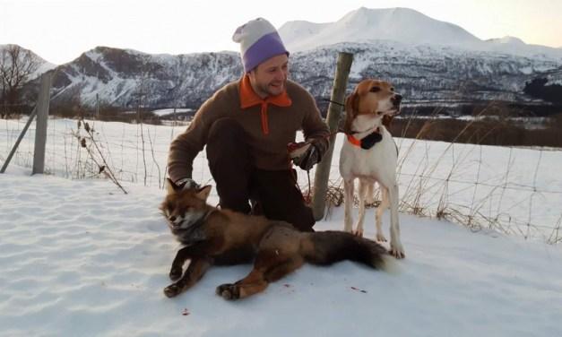 Revejakt med losende hund – 4 tips for å lykkes bedre