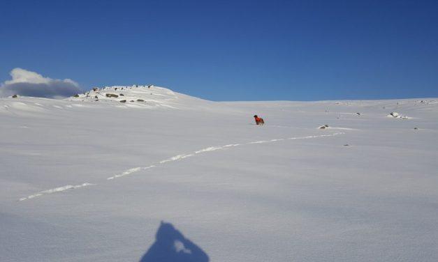Arctic cup – Høystatusløp for unghunder
