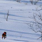 Sarafjellets Fit For Fight del 2. Starten på en jaktprøve karriere