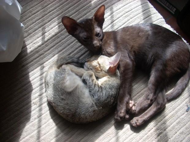 kittens zuluandb