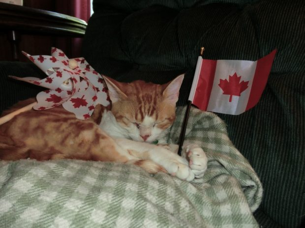 happycanadaday!