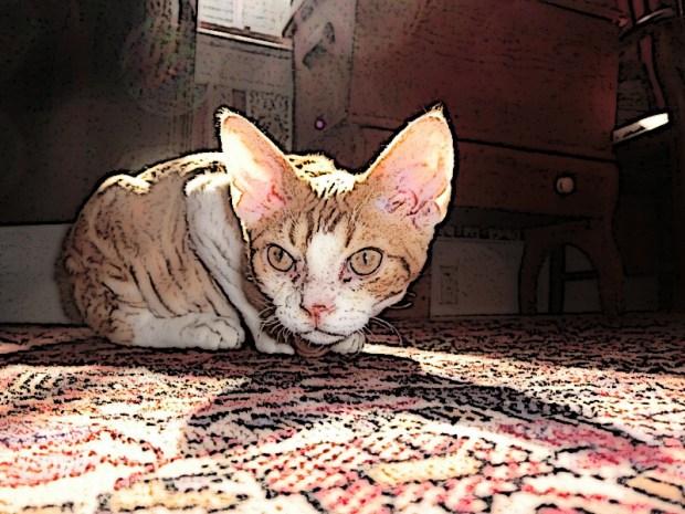 frodo-caturday-cartoon-national-cat-day