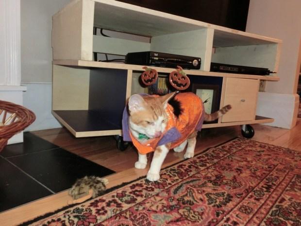 frodo-hallooween-1-costume