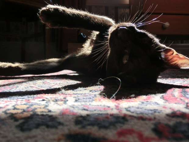 zulu-how-to-properly-use-a-sunpuddle-tilt-just-right