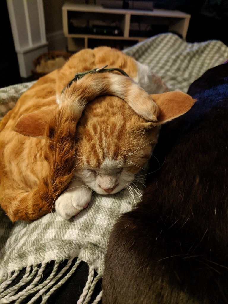 Hairballs And Hissyfits Cat Blog-9156