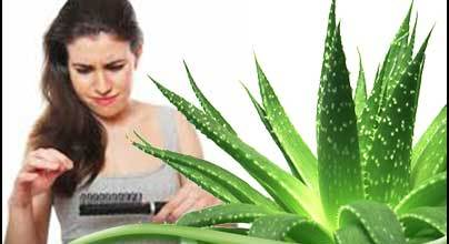 aloe-vera-for-hair-loss