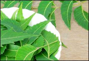 neem-leaves-for-hair-loss-and-hair-growth