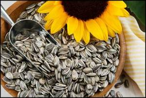 sunflower-seed-oil-for-baldness